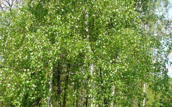 Diur tique via les herbes - Anti herbe puissant ...