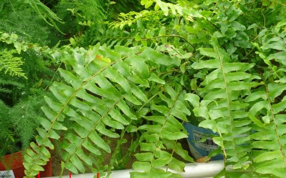 Environnement via les herbes - Les plantes depolluantes purifier l air de la maison ...