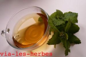 infusion de thym et feuilles de melisse