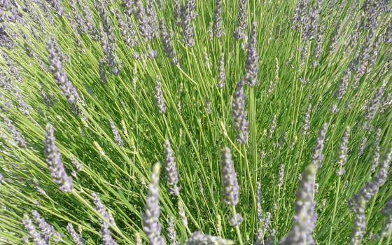 1 8 cin ole via les herbes - Anti herbe puissant ...