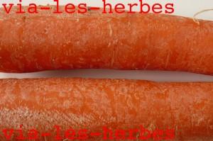 carotte cultivee copie