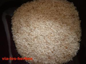 Graines d'ispaghul