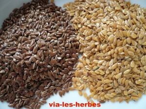 graines de lin brun et dore