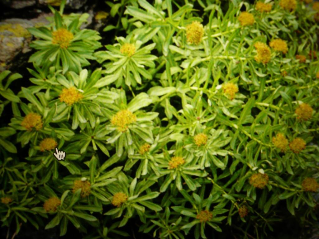 Le stress: prévention et solutions naturelles - Via-les-herbes