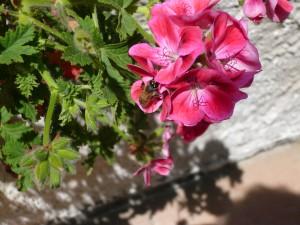 abeille +