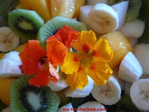 salade de fruits 2